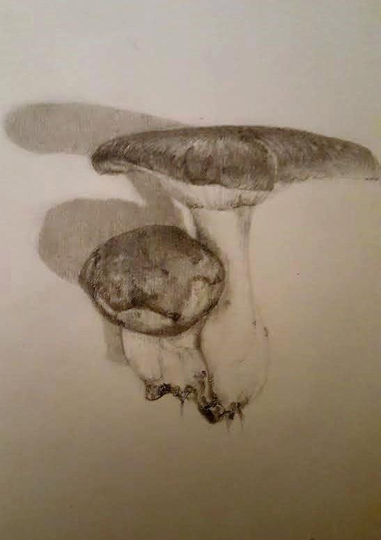Wild Funghi