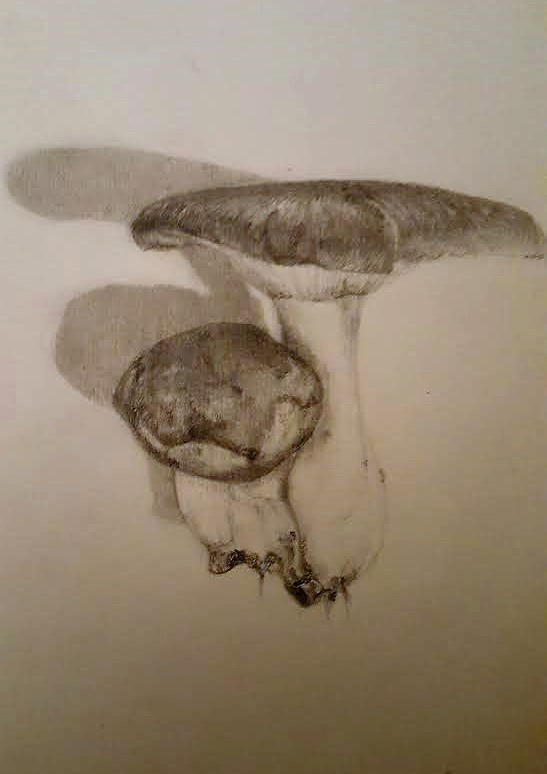 Wild Funghi - pencil drawing